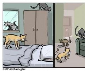 Kocie poszukiwania