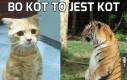 Bo kot to jest kot