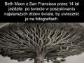 Najstarsze drzewa świata na fotografiach