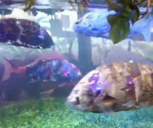 Robo-rybki