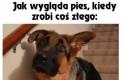 Różnica między kotem, a psem