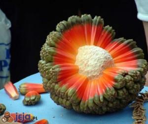 Owoc Hala z Hawajów