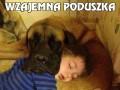 Wzajemna poduszka