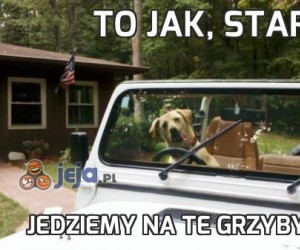 To jak, stary?