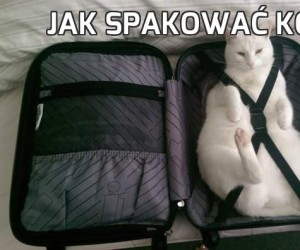 Jak spakować kota?