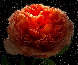 Rysunkowa róża
