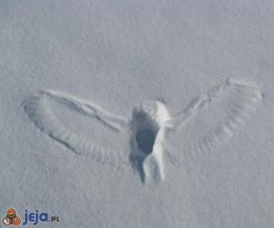 Ślad po sowie polującej w śniegu