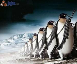 Pingwiny się zbroją