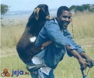 Koza na plecach