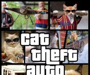 Graliście już w Cat Theft Auto?