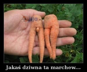 Jakaś dziwna ta marchew...