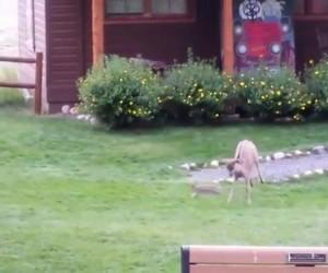 Bambi w prawdziwym świecie