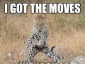 Ten koteł umie tańczyć