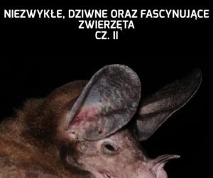Niezwykłe, dziwne oraz fascynujące zwierzęta - Cz. II