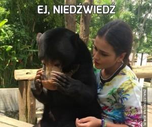Ej, niedźwiedź