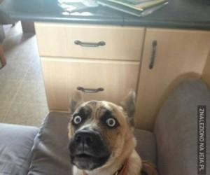 Pies w środku szczeknięcia