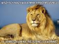 Wszyscy nazywają mnie królem dżungli