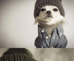 Ten pies jest lepiej ubrany ode mnie