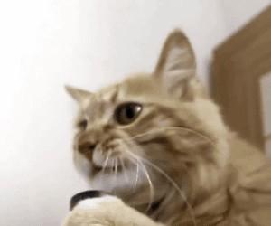 Kot i odkurzacz