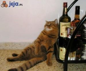 Kot po libacji