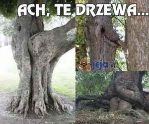 Ach, te drzewa...