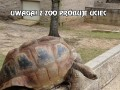 Uwaga! Z zoo próbuje uciec dzikie zwierzę