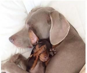 Dwoje psich przyjaciół