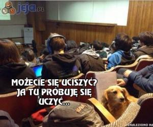 Pies, który chodził na studia
