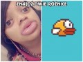 Flappy to Ty?