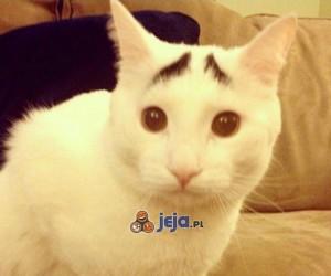 Kot z naturalnymi brwiami