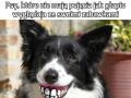 Psy, które nie mają pojęcia jak głupio wyglądają ze swoimi zabawkami cz.2