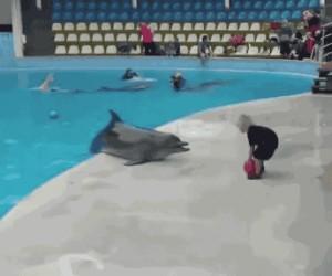 Delfin bawi się z małym chłopcem