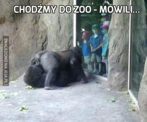Chodźmy do zoo - mówili...