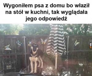 Pies niepokorny