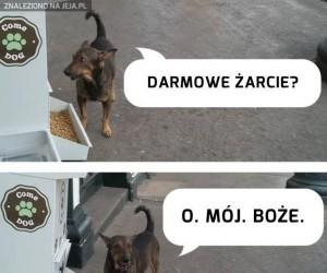 W Kolumbii zainstalowano dozowniki karmy dla bezdomnych psów