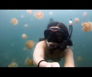 Pływanko z meduzami