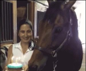 Wszystkiego najlepszego, koniu!