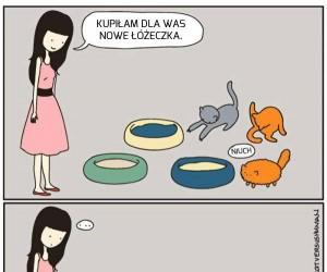 Po prostu koty...