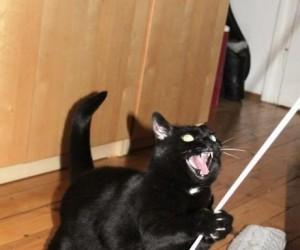 Kot w szponach Photoshopa