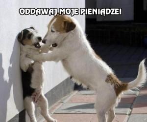 Oddawaj moje pieniądze, Ty psie!