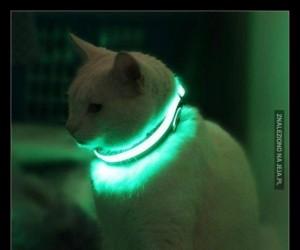 Gdy Twój kot jest modniejszy od Ciebie...