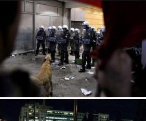 Pies demonstrant