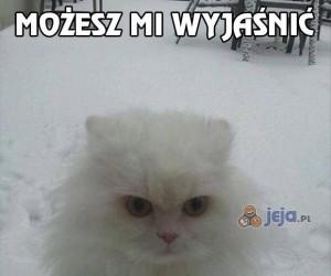 Uspokój się koteł, to nie tak jak myślisz