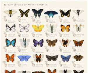 Motyle z Ameryki Północnej