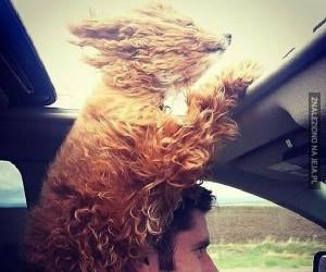 Psy uwielbiają podróżować