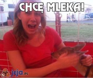 Chcę mleka!