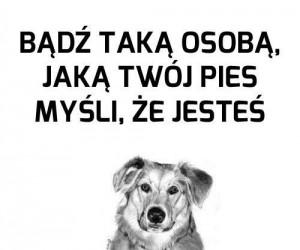 Bądź taką osobą, jaką Twój pies myśli, że jesteś