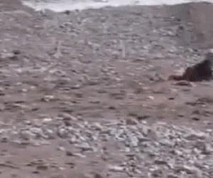 Pies bohaterem!