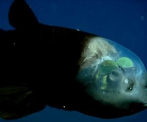 Wielu rzeczy jeszcze nie wiemy o podwodnym świecie...