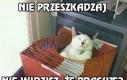 Koteł, może w końcu przestaniesz spać w szufladzie